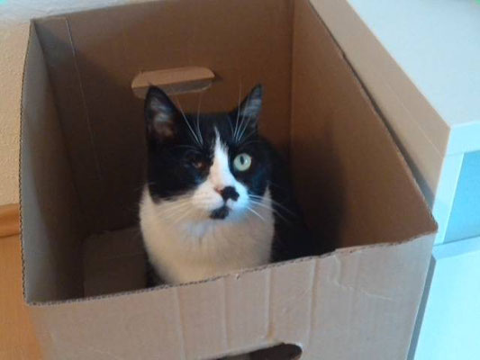 Katze Micia aus Planegg