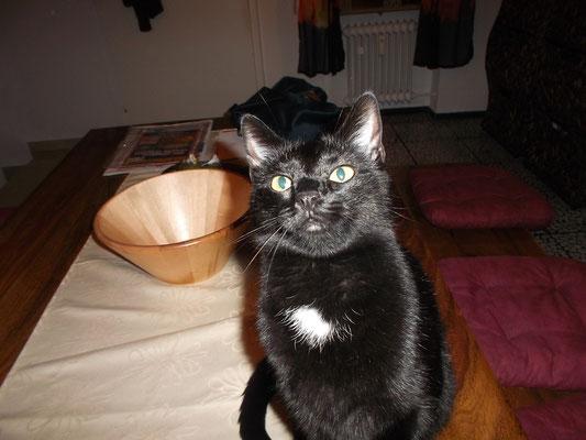 Katze Tebartz
