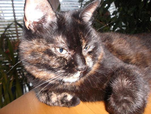 Katze Fay