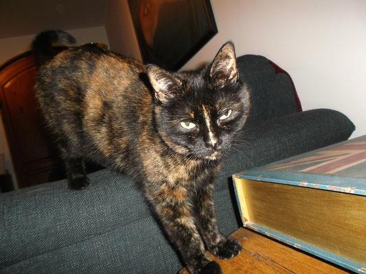 Katze Kiki aus München-Pasing