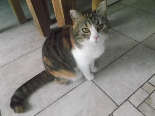Katze Freundin