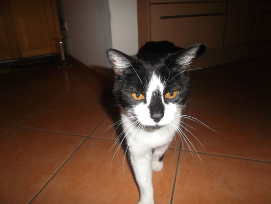 Kater Jojo (zwischenzeitlich leider im Katzenhimmel)