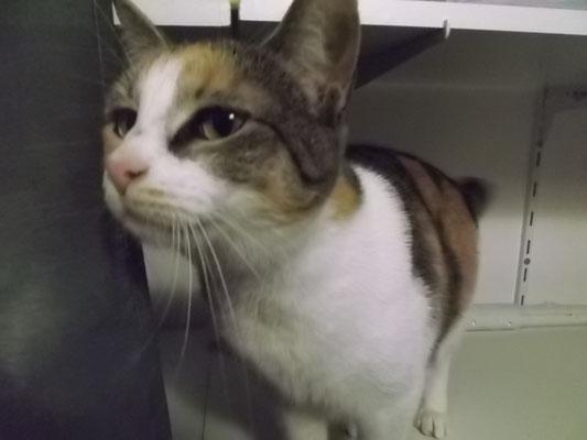 Katze Baby aus Germering