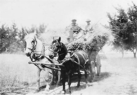 Tony Spaeth and C.W. Johnson on a hay wagon (with Big Jerry and Little Buster)