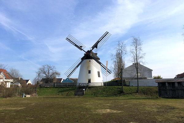 Windmühle in Podersdorf