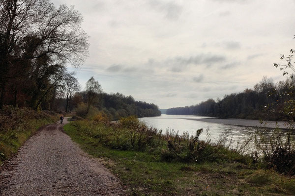 Moorseenradtour an der Salzach (Teilstück Tauernradweg)