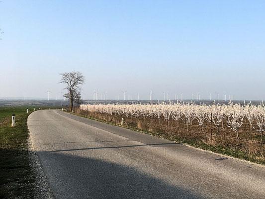Straße nach Velm Götzendorf