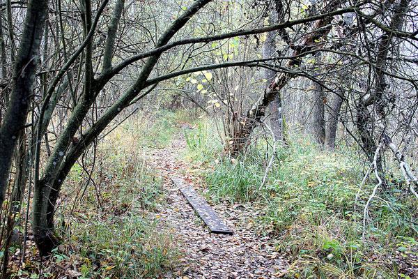 Rundwanderweg Ibmer Moor