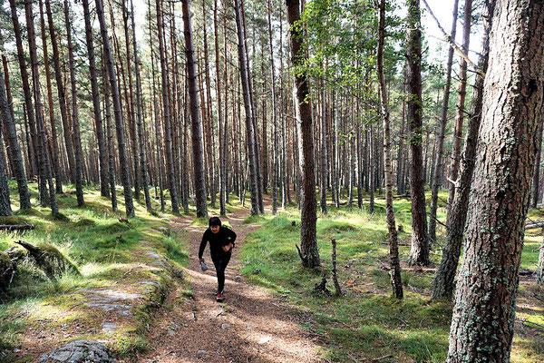 Wanderung auf den Creag Choinnich