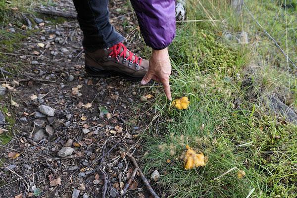 Pilze am Wanderweg des Creag Choinnich