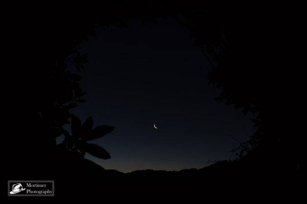 the moon and stars through trees in the jungle