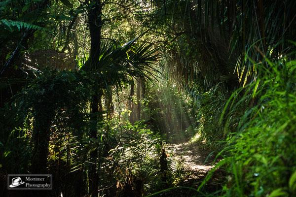 Lichtstrahlen fallen mythisch durchs Blätterdach des Dschungels