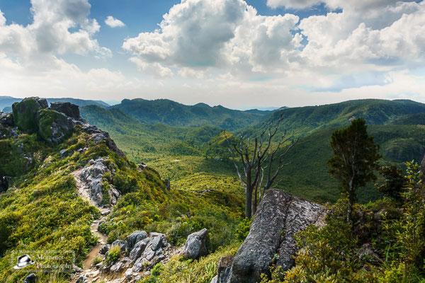 Grüne felszerklüftete Berge im Dschungel der Coromandel Halbinsel