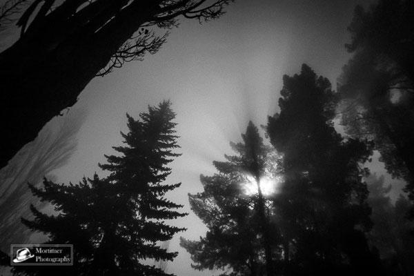 Nachtaufnahme in einem Wald. Der Mond scheint im Nebel durch Wipfel der Bäume
