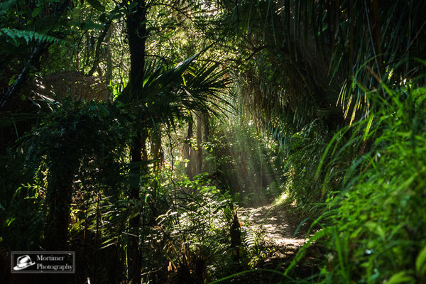 light flashing through the leaves of the trees in the jungle