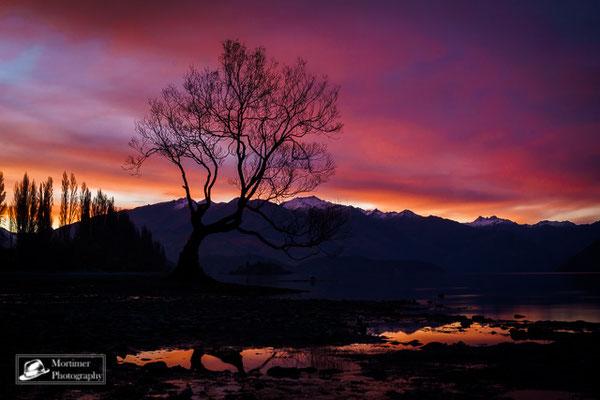 Der einsame Baum in Wanaka vor dem See und der Bergkulisse im Sonnenuntergang