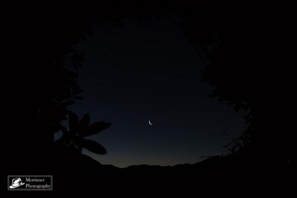 Mond und Nachthimmel durch das Blätterdach des Dschungels