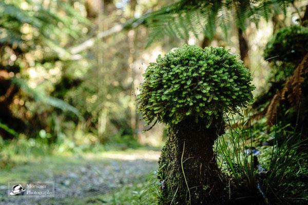 Seltsam geformter Baum im Dschungel