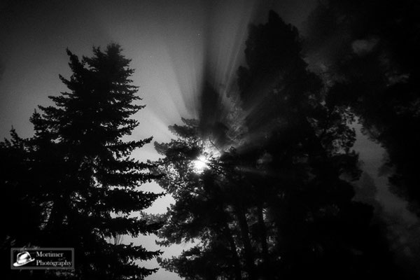 Forest in the night with the moon shining through misty trees and the fog