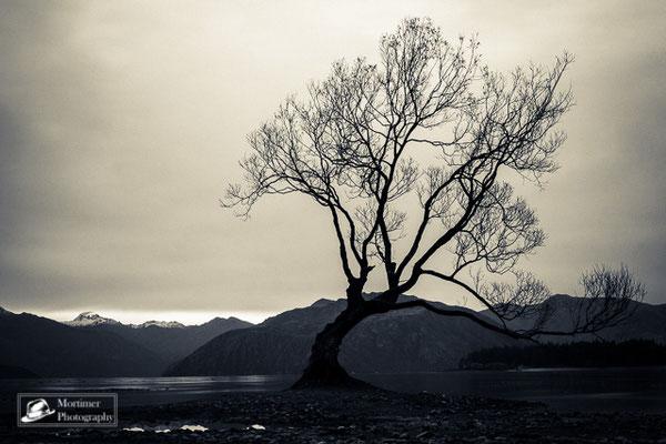 Der einsame Baum in Wanaka vor dem See und der Bergkulisse in schwarz weiß