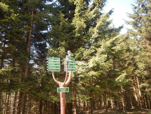 Schilderbaum