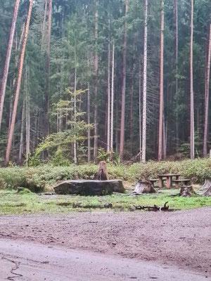 Der Brunnen 2 CP