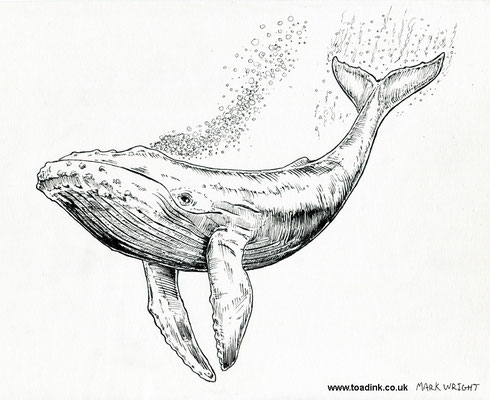 Whale  (2016) Ink pen. All rights reserved.
