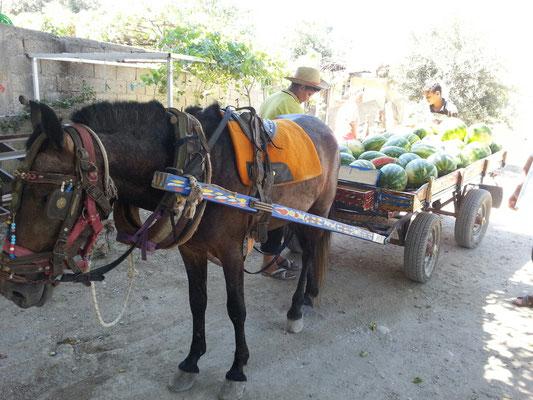 Melonen Express