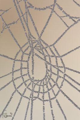 Spinnennetz mit Rauhreif