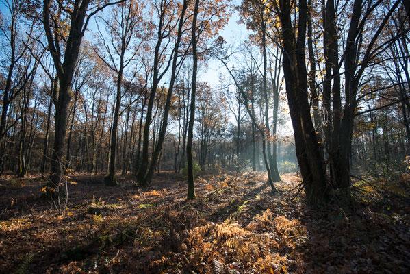 Bois de Ligugé