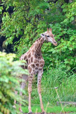 Zoo Dortmund