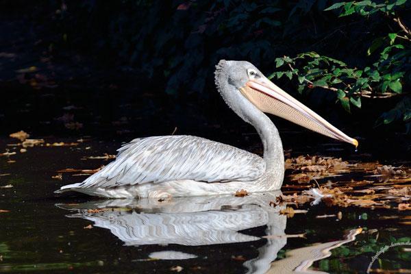 Duisburger Zoo