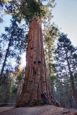Sequoia Nationalpark The Giants / USA