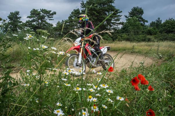 Blumenpflücken mit Uschi - Die Honda CRF250L im Einsatz