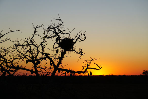 Sonnenuntergang im Chaco  / Paraguay