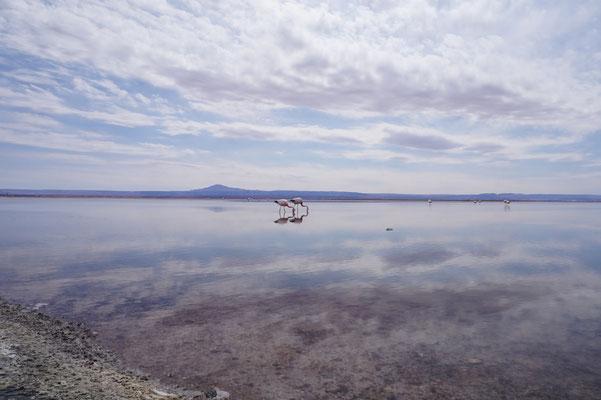 Flamingos - Friedlich und fröhlich