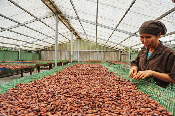 Kakao fermentiert und getrocknet