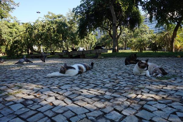 Die Kartzen von Rio / Rio de Janeiro / Brasilien