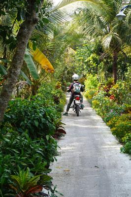 Schönste Wege im Mekong Delta - Weltweit einmalig?