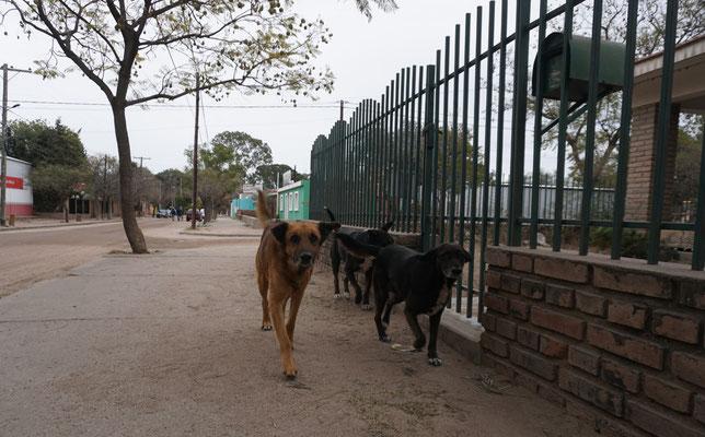 Hundebande....diese war friedlich / Argentinien Teil 1