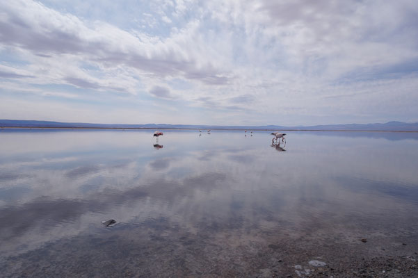 Flamingos /Chile