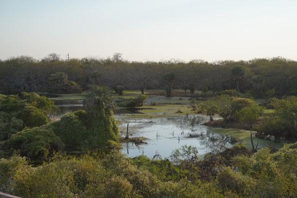 Das reichhaltige Chaco in Paraguay und Argentinien.