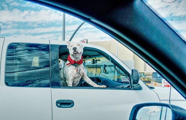 Ein amerikanischer Hund / USA