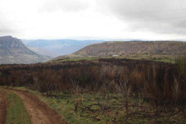 Ecobuage sur lande abritant plusieurs nichées de busards en zone coeur de Parc National (2015)