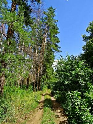 ...wohin der Weg uns auch führen wird...Waldweg in der Nähe von Boppard/Rhein