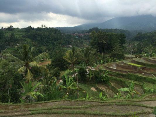 ...aus Bali