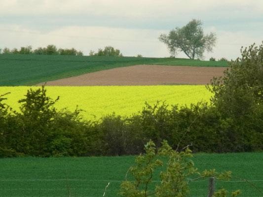 """Farbenspiel der """"Natur"""" - Raps, Acker, Wiese, Getreide..."""