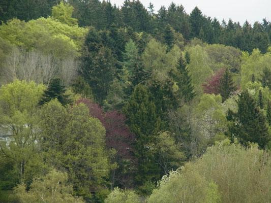 Farbenpracht des Waldes