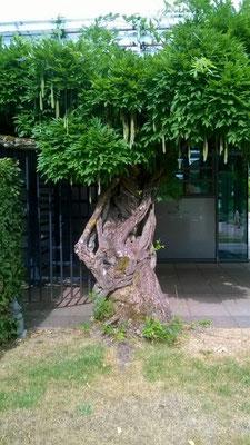 Gartenimpressionen (ZW)