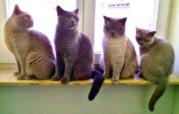 Michi, Emil, Laxy und Mercedes